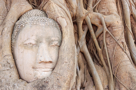 sacked: Buddha Head in the Wat Maha That temple in Ayutthaya, Thailand Stock Photo