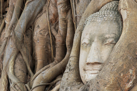preferable: Buddha Head in the Wat Maha That temple in Ayutthaya, Thailand Stock Photo