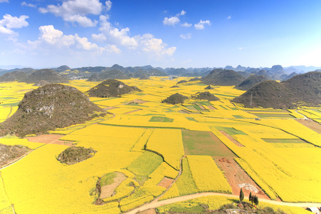 Rapeseed flowers of Luoping in Yunnan China Reklamní fotografie