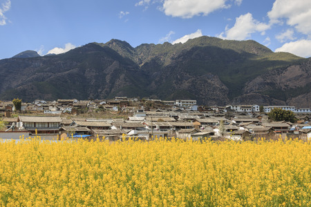 Aerial view of rapeseed flowers around ShiGu village near Lijiang . ShiGu is in Yunnan, China, and was part of the South Silk Road or ChaMa GuDao Stock Photo