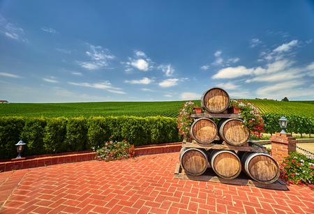 Vineyard with wine barrels in Recas, Romania.
