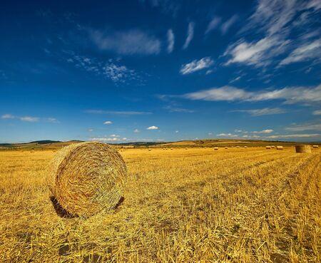 Ballots de paille sur le champ de l'agriculture récolté. Banque d'images