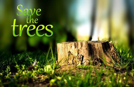 deforestacion: Tronco de un �rbol cortado, s�mbolo de la deforestaci�n.