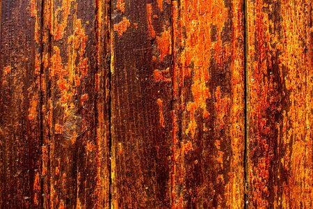grunge wood: Yellow orange shrivelled wood  texture.