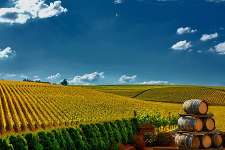 Vignoble avec des barils de vin à Recas, Roumanie. Banque d'images - 53394473