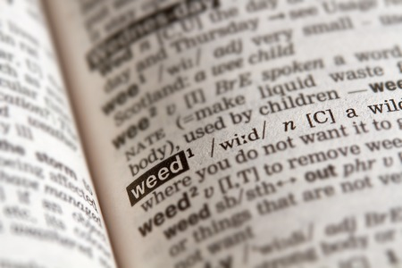 definition: Weed Word Definition Text in Dictionary Page