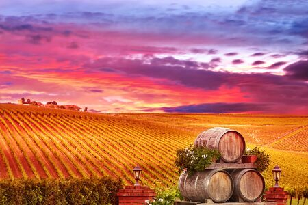 vineyard at sunset: Vineyard Sunset Landscape with Wine Barrels in Romania. Stock Photo