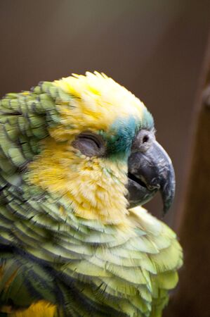 Picture of a parrot with beautiful colors photo