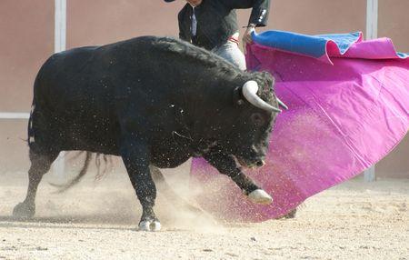 Lucha contra el imagen de Toro de España. Toro negro Foto de archivo - 5545246