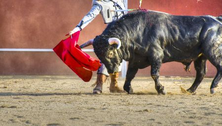 matador: Vechtende stieren foto uit Spanje. Zwarte stier  Stockfoto