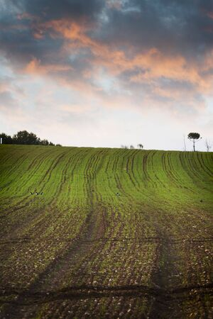 Agriculture field, green nature photo
