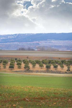Farm field Stock Photo - 6734737
