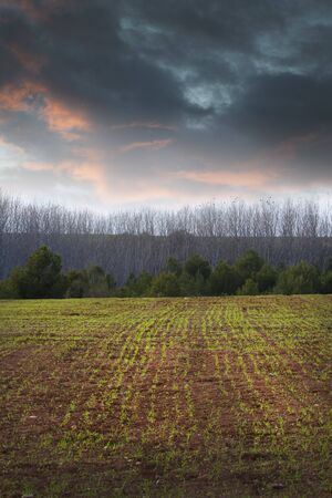 Agriculture field Stock Photo - 6734756