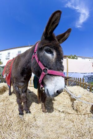 grosse fesse: Farmland and  Donkey