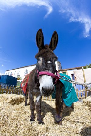 grosse fesse: Farmland and  Donkey