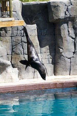 Beautiful sea lion in a natural environment photo