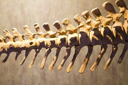 Dinosaur bones, educational exposure photo