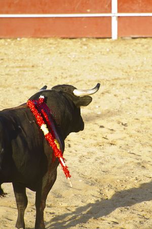 Spanish bull. Bullfight. Animal of great strength and nobility Stock Photo - 7815368