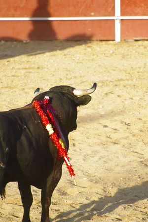 Spanish bull. Bullfight. Animal of great strength and nobility Stock Photo - 7815370