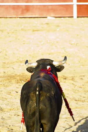 Spanish bull. Bullfight. Animal of great strength and nobility Stock Photo - 7815362