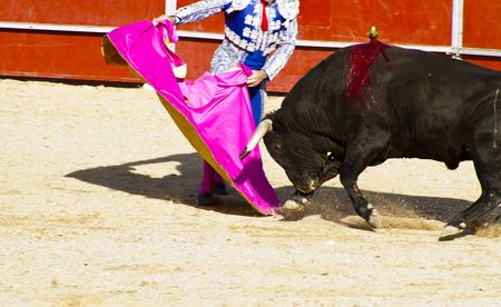 Torero and bull in bullfight. Madrid, Spain. Stock Photo - 7815376