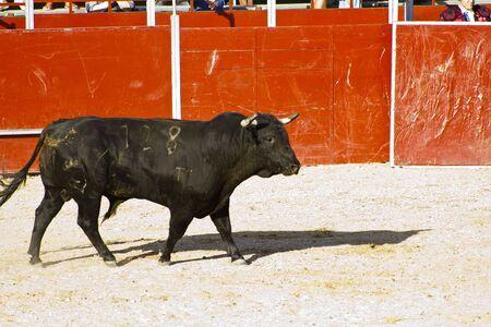 Spanish bull. Bullfight. Animal of great strength and nobility Stock Photo - 7816479