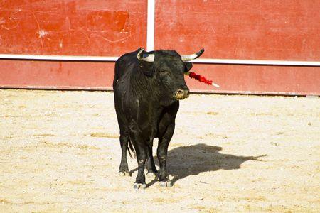 Spanish bull. Bullfight. Animal of great strength and nobility Stock Photo - 7815395