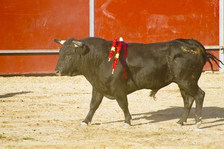 Spanish bull. Bullfight. Animal of great strength and nobility Stock Photo - 7816468