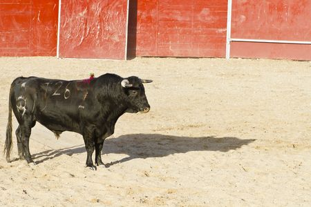 Spanish bull. Bullfight. Animal of great strength and nobility Stock Photo - 7816561