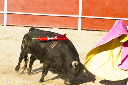 bloodsport: Torero and bull in bullfight. Madrid, Spain.
