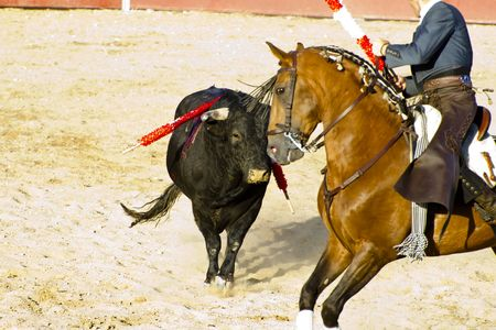 bloodsport: Bullfight on horseback. Typical Spanish bullfight. Stock Photo