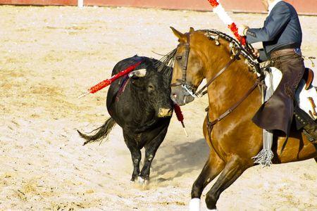 corrida: Corrida � cheval. Corrida espagnole typique. Banque d'images
