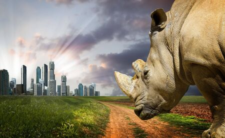 nashorn: Leistungsstarke Rhino bei Sonnenuntergang. Natur gegen den Fortschritt