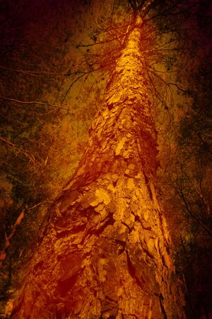 conflagration: Fire in the forest, conceptual