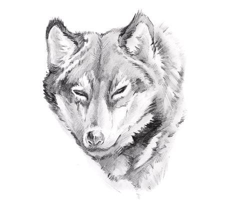 Sketch of tattoo art, wolf Stock Photo