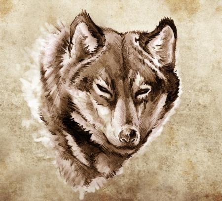 lobo: Boceto de arte del tatuaje, la ilustraci�n de una cabeza de lobo Foto de archivo