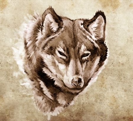 Sketch of tattoo art, Illustration of a Wolf head illustration