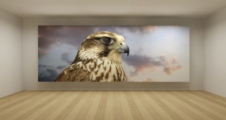 Empty room with falcon picture, 3d art concept, clean space photo