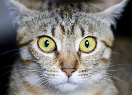 common breed cat, with frightened eyes