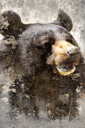 wet bear: Artistic portrait with textured background, black bear head Stock Photo