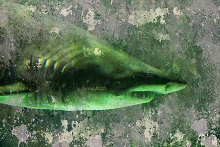 killer waves: Shark, artistic background textures Stock Photo