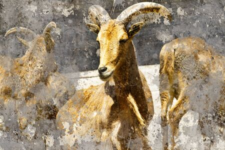 Ibex. Artistic image with background textures photo