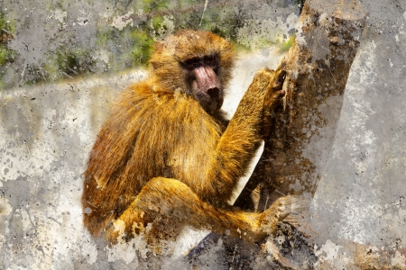 Artistic portrait with textured background, baboon photo