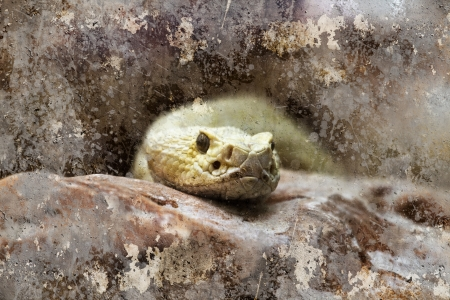 Snake head, artistic image with background textures photo