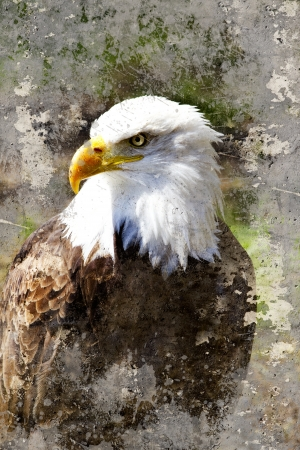 Artistic portrait  of a bald eagle (lat. haliaeetus leucocephalus) with textured background photo