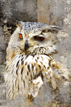 Great Horned Owl (Bubo virginianus) Intense Stare, artistic portrait with textured background photo