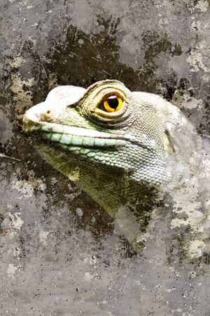 Iguana over textured background Stock Photo - 16958876