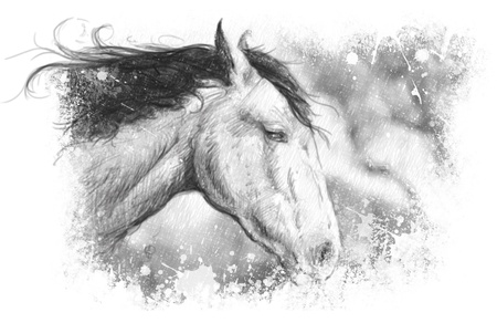 Horse illustration, tattoo art, sketch illustration