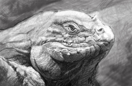 Iguana art, tattoo style. Awesome illustration in grey pencil illustration
