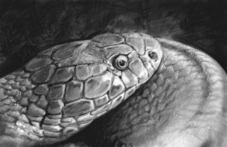 Snake tattoo sketch illustration made with pencil Stock Illustration - 17927141